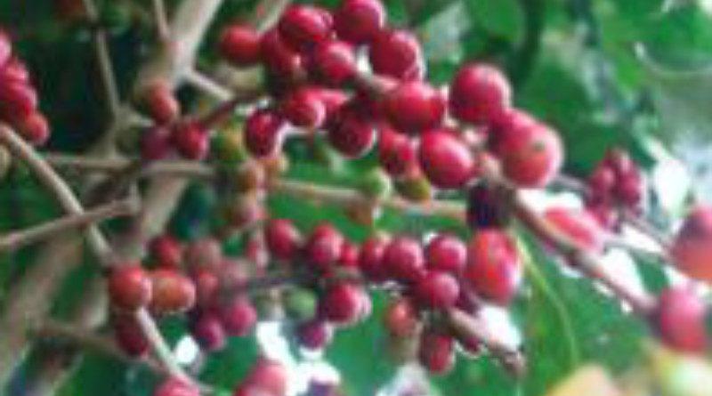 cofee-from-da-website