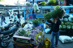 MONEY FLOWER. Cut flower growers of Benguet gears up for the 2017 Panagbenga. Photo by JOSEPH B. MANZANO.