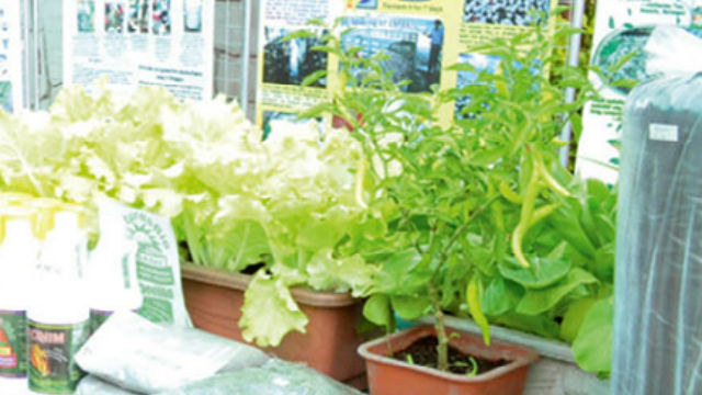 Development of organic agriculture in city okayed – HERALD