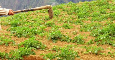 Bontoc Farmers urge to insure crops and livestock
