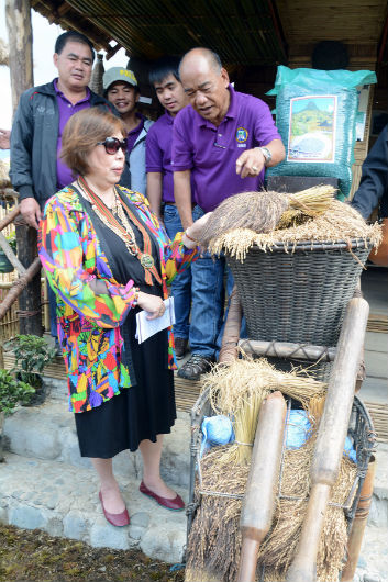 Kibungan Mayor Cesar Molitas show to Tourism Undersecretary Alma Rita Jimenez the heirloom rice grains being grown in the municipality during the latter's visit to the Benguet Tourism and Cultural Village in Wangal, La Trinidad, Benguet last February, 2017. (March 5, 2017) REDJIE MELVIC CAWIS, PIA-CAR.