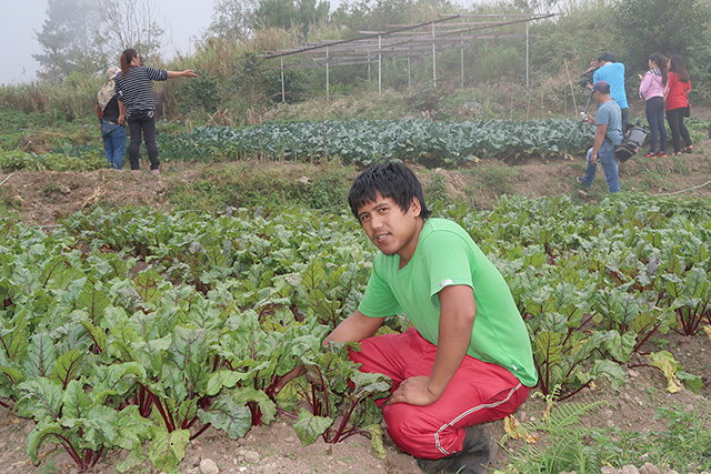 ORGANIC FARMING: Charwell Olo-an is pictured Tuesday, March 14, tending to his plot of sugar beets, one of the vegetable varieties found in the 300-square-meter organic farm he works on with his father, in Sitio Macalbeng Brgy. Camp 3 of this town, and in cooperation with the Philex Group Foundation, Inc. (PGFI). The 27-year-old farmer, who holds an agro-forestry degree from the Benguet State University, in La Trinidad, says his organic farm has yielded so much more for harvest since he and his father, Domingo, 55, converted this from a synthetic garden. Eduardo M. Aratas