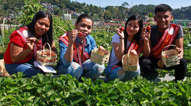 STRAWBERRY PICKING - Baguio-Benguet Lucky Summer Visitors (BBLSV) Rolando Antiporda Jr. and  Karen Villanueva of Bulacan, Annabel Recolito  of Misamis Occidental and Ma.Jean Deyto from Sorsogon enjoy strawberry picking at the La Trinidad Strawberry Farm. The BBLSV received a VIP treatment from the Baguio Correspondents and Broadcasters Club (BCBC) with the cooperation of the local government units of Baguio and Benguet. - Photo by RJ CAYABYAB