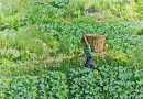 Food Gardening Congress in Baguio set July 28